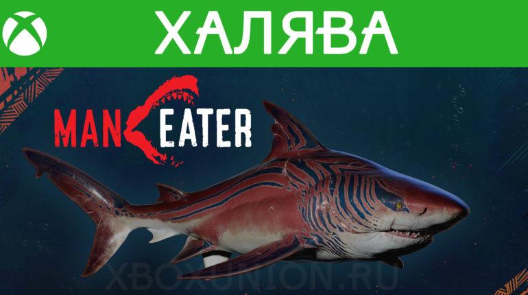 Скин тигровой акулы для Maneater доступен бесплатно в Microsoft Store
